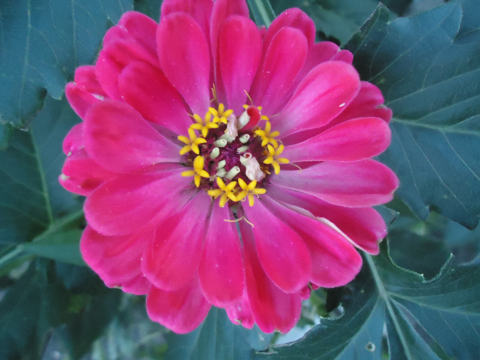 Садовые цветы фото видео