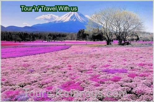 tour trip india   india tourism   tourist place of india   agency best for indian tour