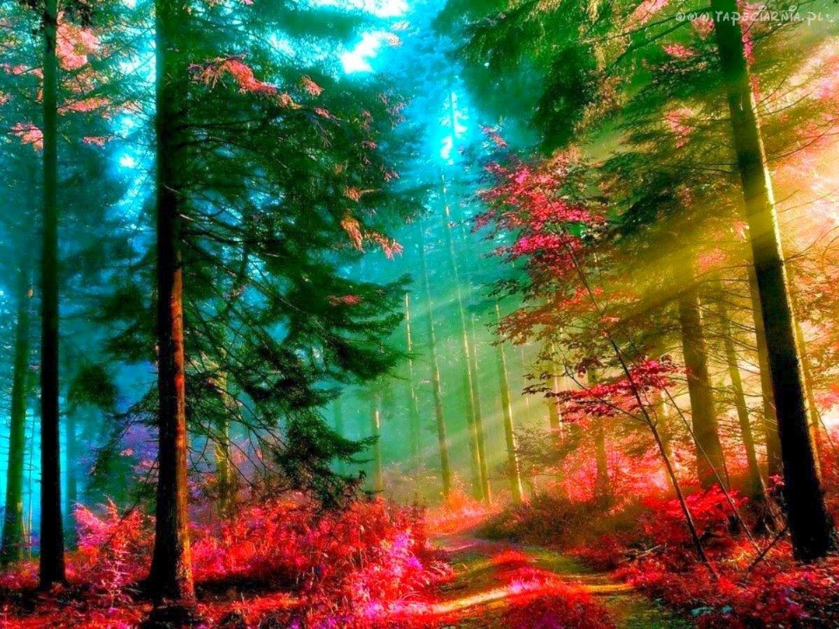http://www.tapeciarnia.pl/157194_drzewa_las_sciezka.html