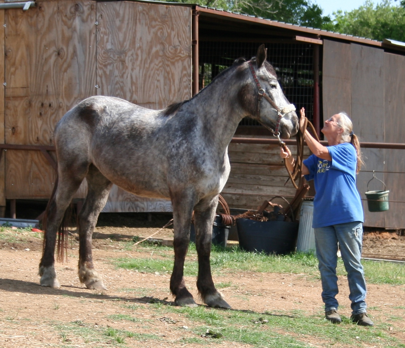 Horses Mating Page 7 | Dog Breeds Picture