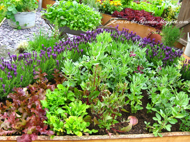 cute vegetable garden ideas - Garden Ideas Vegetable