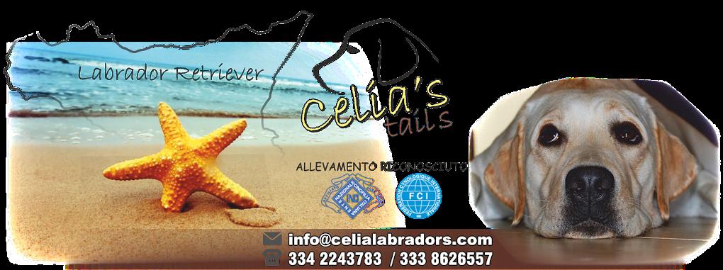 Allevamento Labrador Retriever in Sicilia, Cuccioli Labrador Retriever - Sicilia, Ragusa