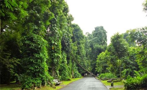 Wisata Ke Kebun Raya Bogor