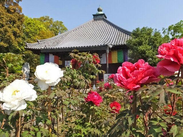 本山の「長谷寺」から贈られた二株からスタートした。