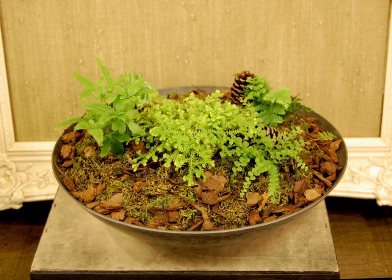 the indoor garden a fern and moss garden. Black Bedroom Furniture Sets. Home Design Ideas
