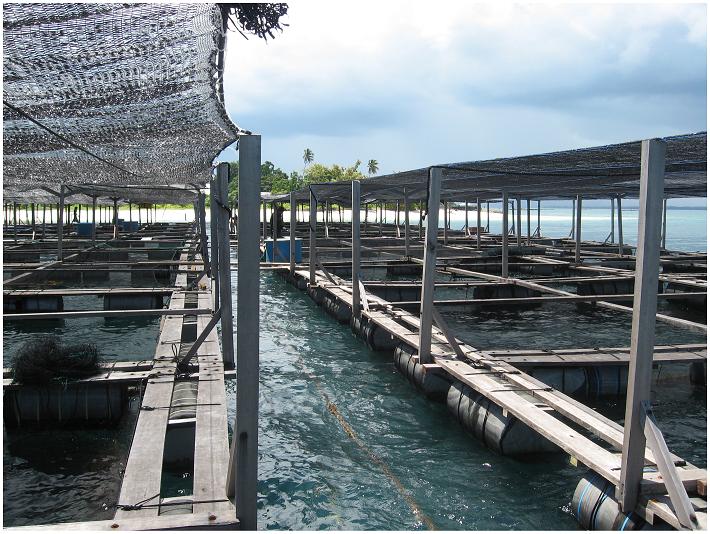 Pulau Ngelengele Wisata Pulau Morotai Info Tempat Wisata