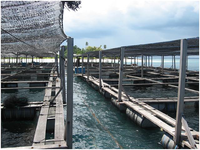Pulau Ngelengele - Wisata Pulau Morotai
