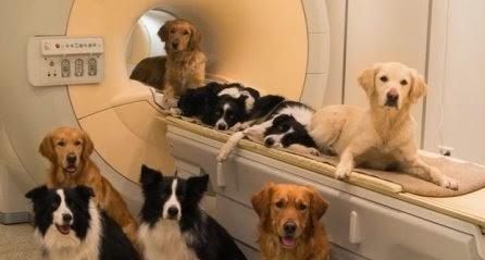 os cães demonstram maior sensibilidade a um tom de voz