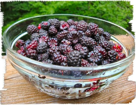 wild black raspberry - bowl of berries photo