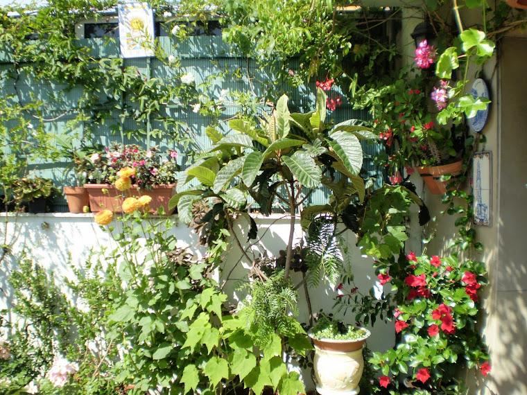 Espacio para trepadoras y otras plantas delicadas