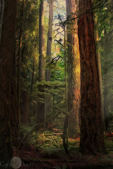 Cathedral Grove- Beautiful BC