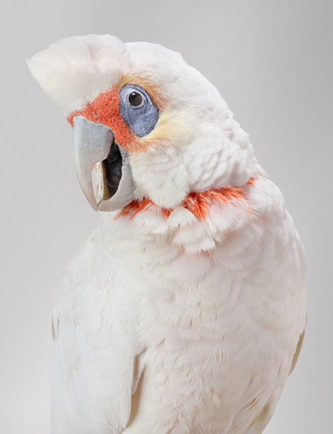 Leila Jeffreys parrots photography