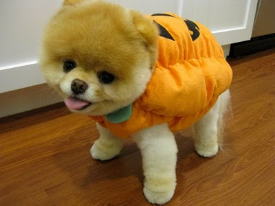 anjing lucu, anjing imut, anjing terlucu, anjing terimut, anjing menggemaskan