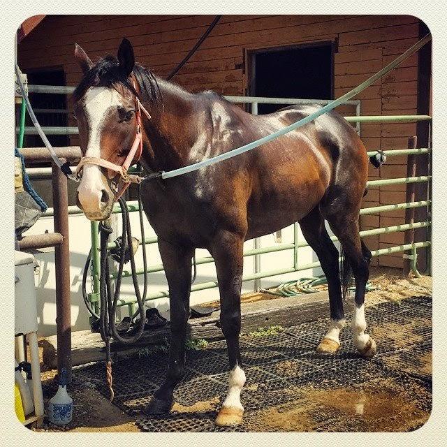 Bath time horse