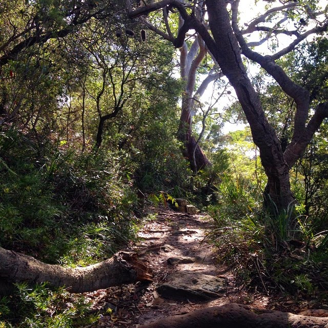 Bushwalking in Oatley Park