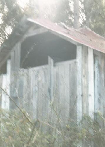 Chiếc tủ lạnh nằm trong rừng phần 2