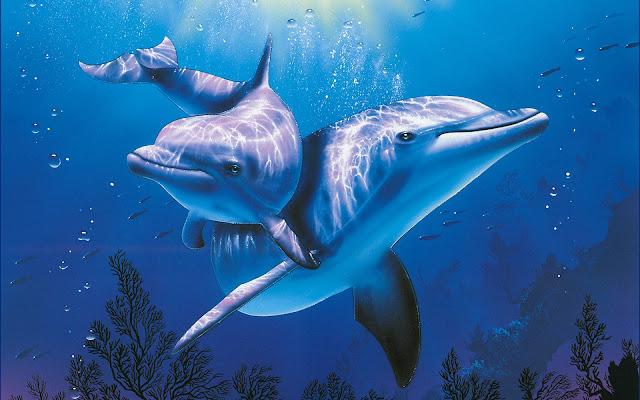 Imágenes de Parejas de Lindos Delfines - Fotos de Delfines