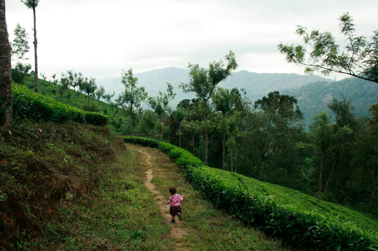 Tea Fields, Munnar