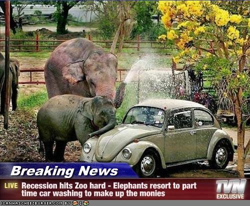 Elephant Car Washing hits the econonmy