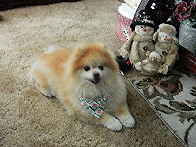 Tia after visiting the groomer