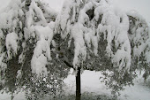 neve in Italia 4 feb 2012