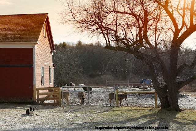 sms good morning