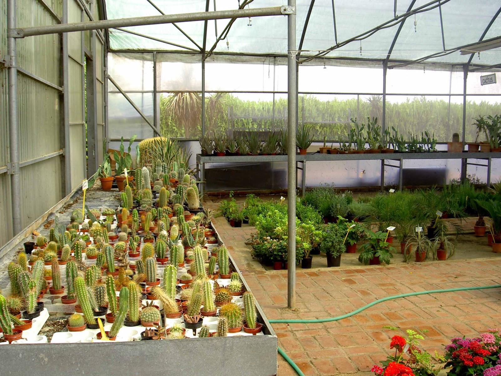 el sello verde entre las plantas del vivero