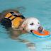 Το κολύμπι κάνει καλό!