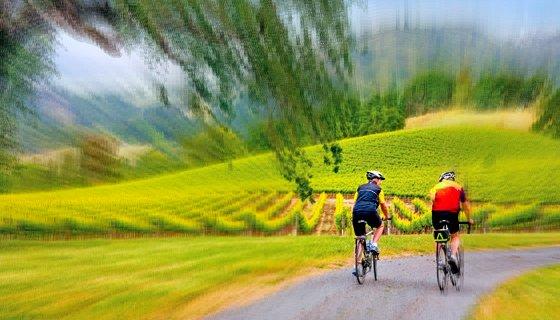 Wine Country Bike Tours Sonoma