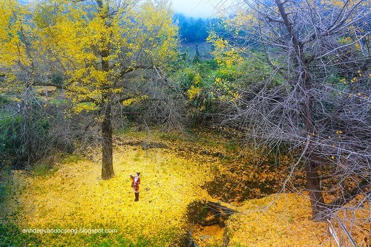 Thiếu nữ dao phố mùa thu 11