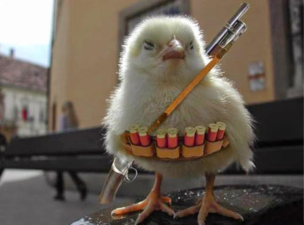anak ayam berperang