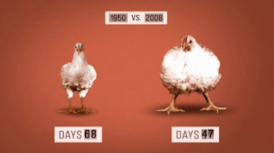 Factory Farms: Bad For Animals And Bad For Your Health