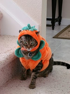 Funny Image Collection: Top Funny Cat Halloween Pictures in worlds!