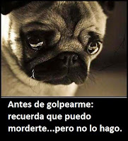 NO ME GOLPEES