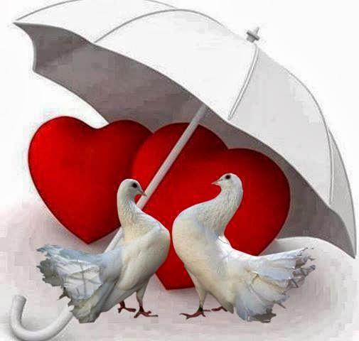 Paraguas Del Amor Bajo el Paraguas Del Amor