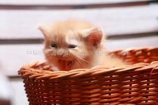 Arti Meong-an Kucing, meong,  makna meongan kucing, suara kucing, cara kucing berbicara