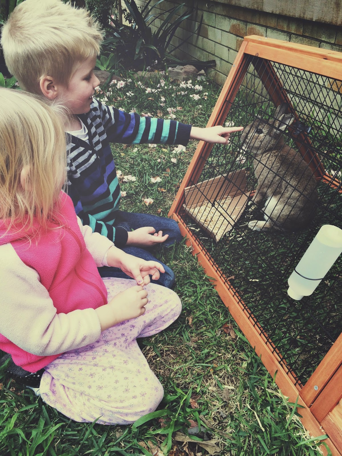 pets and teaching children about resposibility