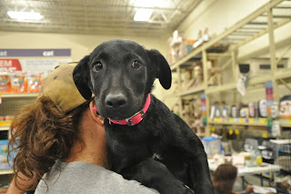 black lab puppy being held during an adoption event