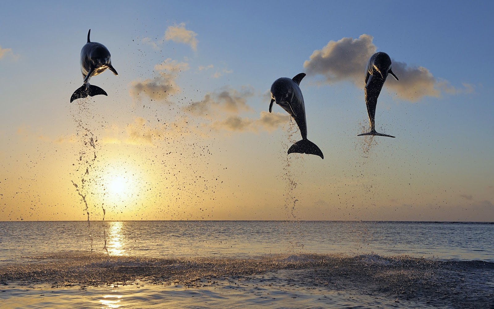 Dolphins jumping in sea at sunset ~ Mystery Wallpaper