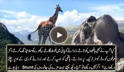 Amazing Stunt by Animals Must Watch
