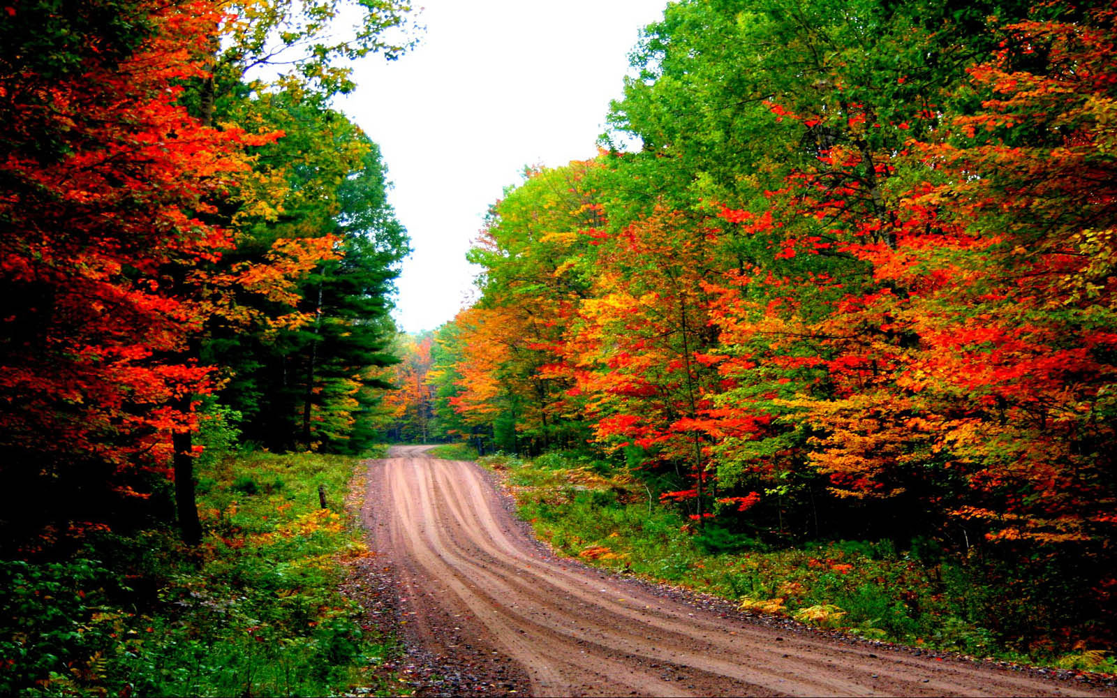 Autumn Road Desktop Wallpapers