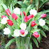 Bunga Ulang Tahun Romantisme Kasih Sayang