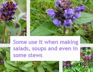 Prunella vulgaris benefits