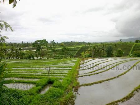 Jatiluwih rice fileds Bali