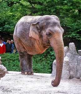 Two legs Elephant