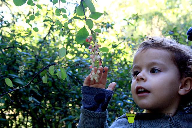 otoño de los niños