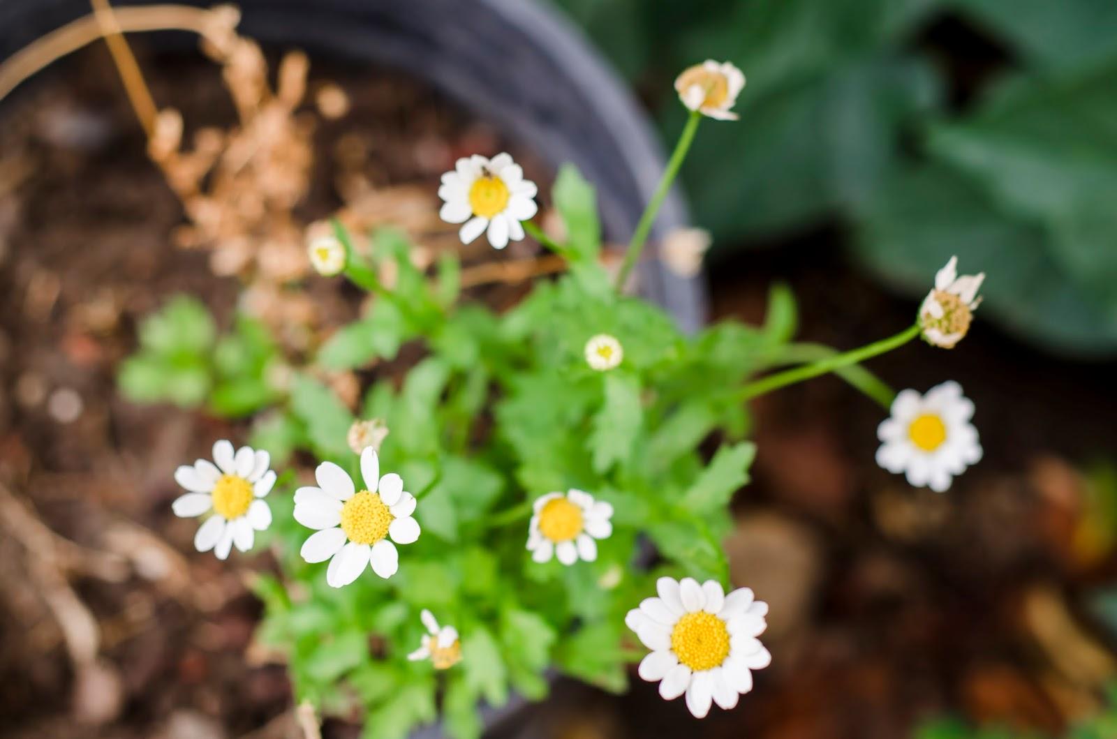 Feng shui fusi n las plantas y flores para cambiar la for Flores para el hogar feng shui