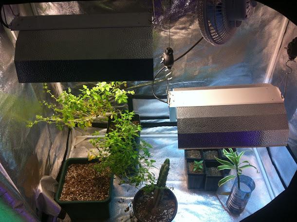 Vamos cultivar? #indoor #cultivoindoor