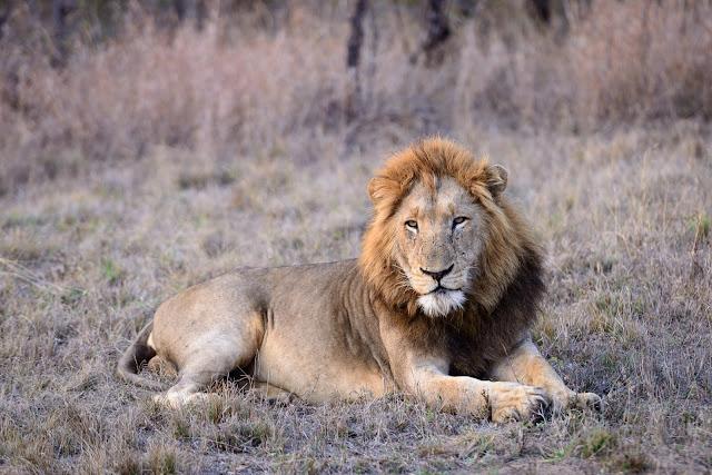 King of Kruger