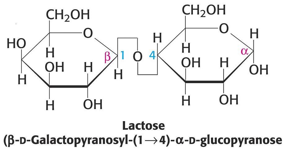 Biologiaamanda1 b los glucidos t 1 for Como se escribe beta